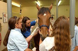 US_News_Horse