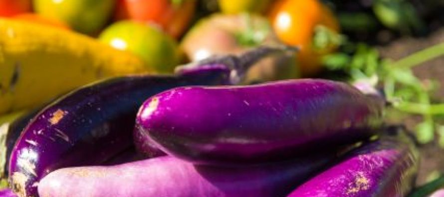 CSU institute harvests sustainable garden at Coors Field