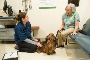 A veterinary student and dog owner are in discussion in an exam room as the dog patiently sits.