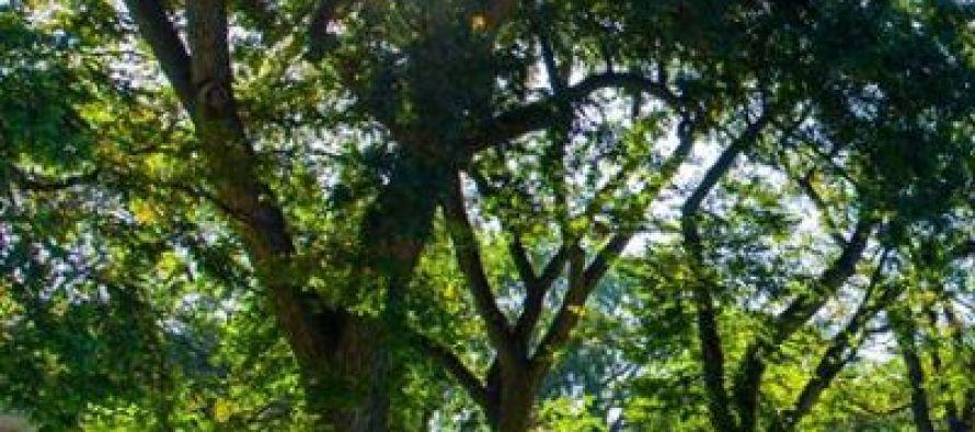 Favorite Tree Campus USA