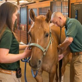 Vets present 'Coping with Colic in Horses'