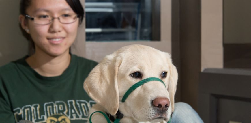 Veterinary student sits behind guide dog as the guide dog looks ahead
