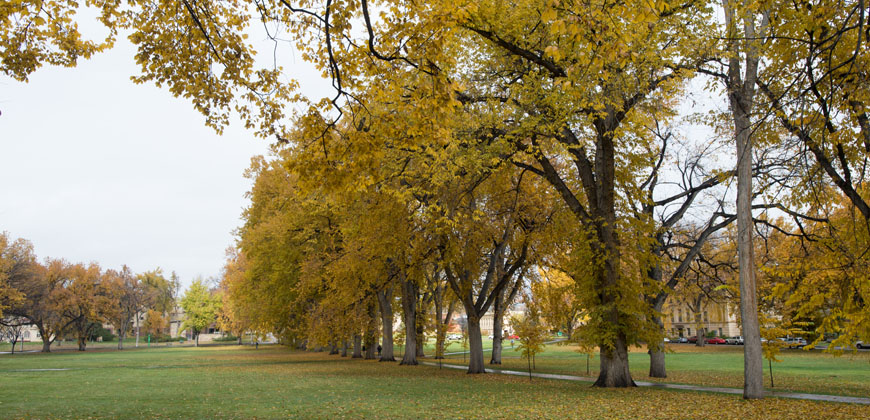 oval in fall