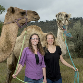 Camels emit dangerous MERS virus, CSU confirms