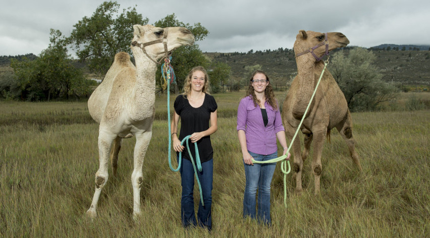 graduate students from CSU with two camels