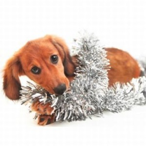 A dog is wrapped up in tree tinsel.