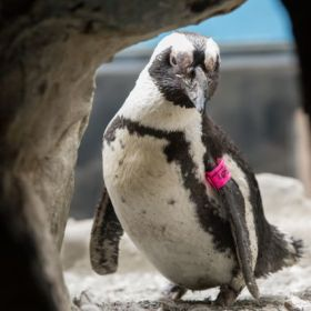 Happy feat: World's oldest penguin visits veterinary hospital