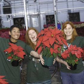 Hands-on horticulture: student poinsettia sale