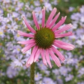 Plant exploration flourishes at CSU