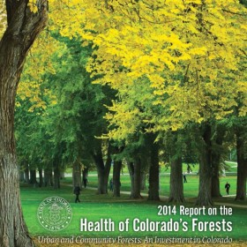 Forest Health Report focuses on urban, community trees