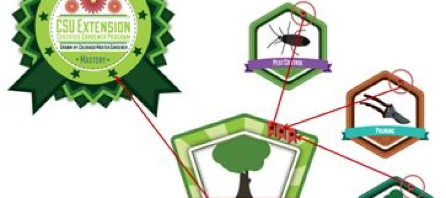 Badges offer flexible, innovative education