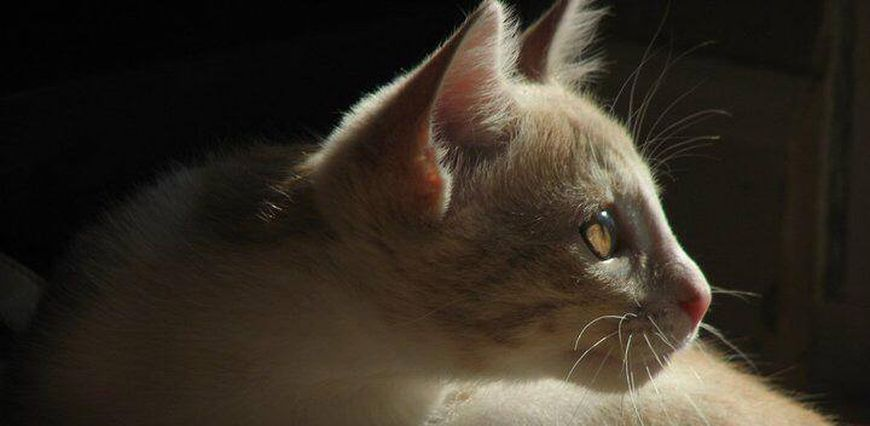 Artistic picture of a cat looking away from the camera, perching toward a light.