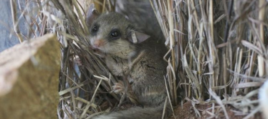 Rats! Study finds in East Africa, more farmland means more plague-infested rodents