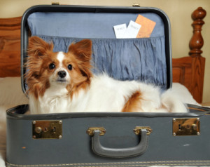 A small dog sitting in an open suitcase.