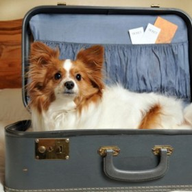 Pet Health: Traveling safely with your pet