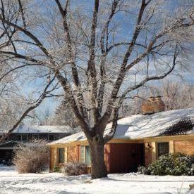 winter_tree_square