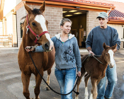Just 12 hours after birth, a mare and her foal are bright and active. Veterinary student Fallon Tranel and Dr. Patrick McCue lead the twosome back to a stall after a favorable postpartum exam.