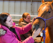 Dr. Kristen Loncar, a veterinarian and resident in equine reproduction, leads students in an evening check to gauge how soon a mare might deliver.