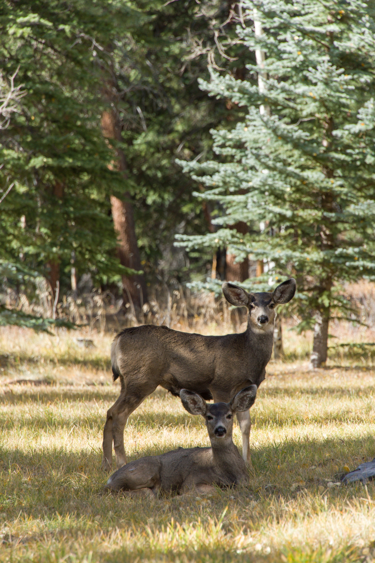 University Of Colorado Health Sciences Center >> Forum targets proteins in chronic wasting and human disease | SOURCE | Colorado State University