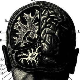 Brain power: It's heady stuff during awareness week