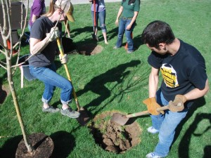 Tree Campus USA planting - Apr2013 121