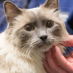 Pet Health: Be aware — hairballs are the natural result of your cat's grooming behavior