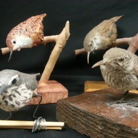 For the birds: CSU 3D lab prints bird decoys for field study