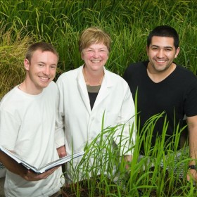 Precise genome editing may improve rice crops,