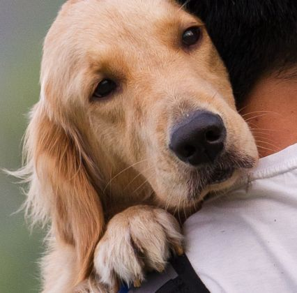 caring pets