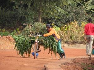 Bill Timpson-bike