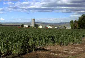 Corn production in Colorado. Photo by Scott Bayer/USDA