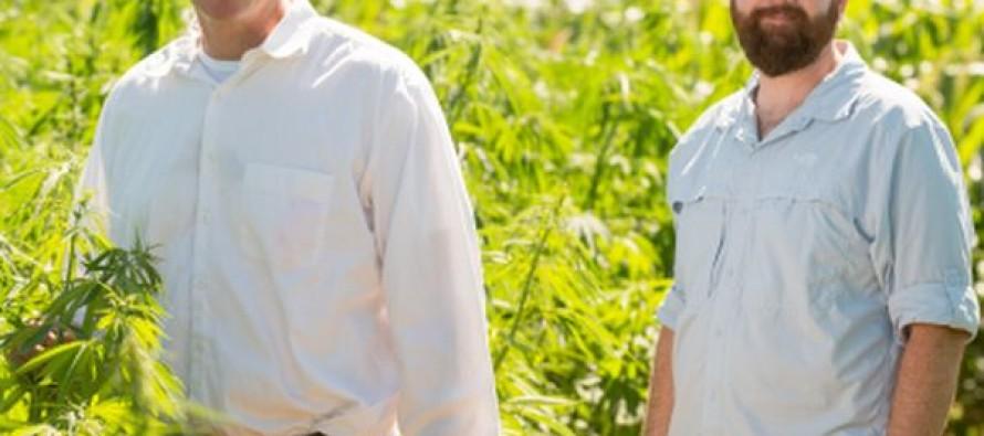 CSU researchers investigate industrial hemp
