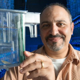 Groundbreaking study finds changing environment can lead to rapid evolution