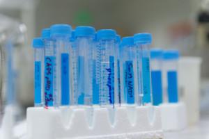 Test tubes in a CSU lab