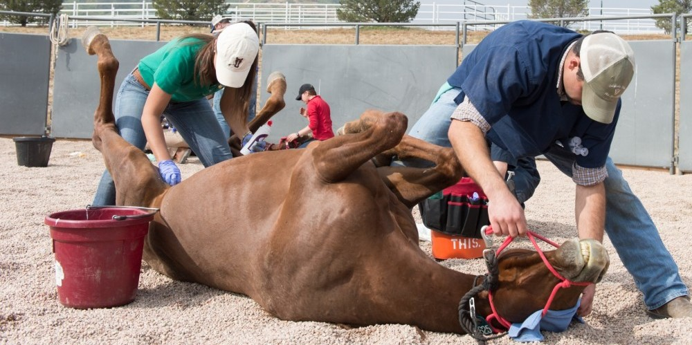 a second chance at life veterinary students help rescued
