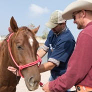 A second chance at life: Veterinary students help rescued horses and gain valuable skills at rehabilitation center