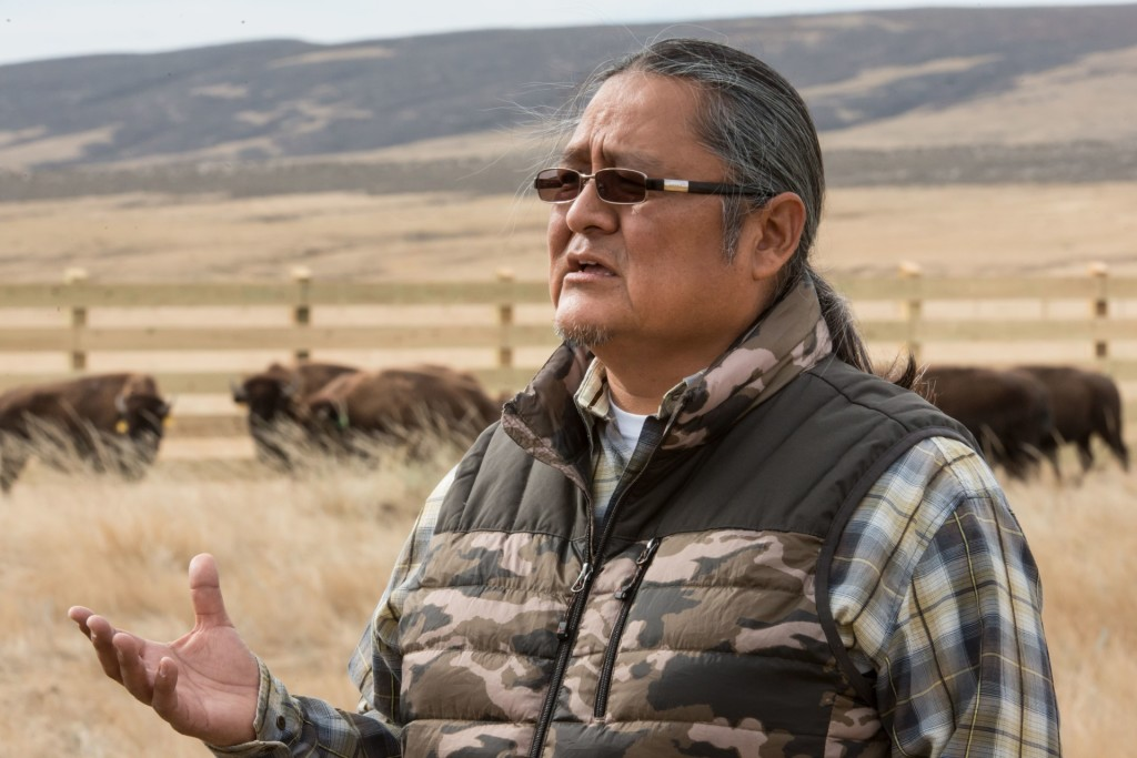 Colorado State University Native American Cultural Center Director Ty Smith watches as as a herd of bison are released at Soapstone Prairie Natural Area, October 20, 2015. CSU researchers have established a herd of genetically pure, Brucella abortus-free bison to be released in the City of Fort Collins Soapstone Prairie Natural Area and the adjacent Larimer County Red Mountain Open Space.