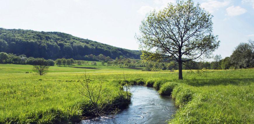 Stream in meadow by tree