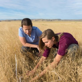 Apply now for conservation fellowships