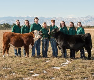 2015-2016 Seedstock Merchandising Team, College of Agricultural Sciences, Colorado State University, December 3, 2015