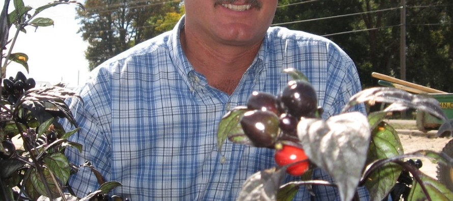 CSU researchers spicing up pepper varieties