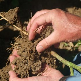 To restore our soils, feed the microbes