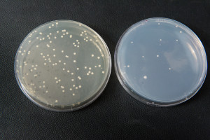 Argueso yeast DNA research
