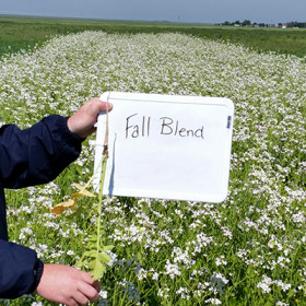 Economic and environmental potential of High Plains cover crops
