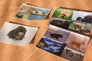 Animal photos in Joel Berger's wallet