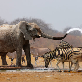 Unique outreach builds African conservationists' skills