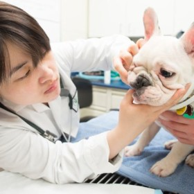 Pet Health: Veterinary dentistry takes the bite out of gum disease