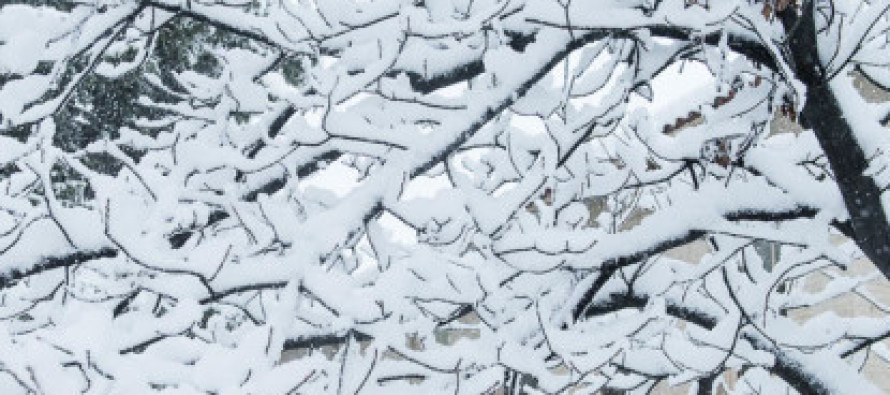 How to deal with snow-damaged trees