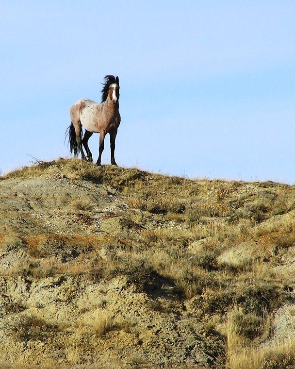 wild.horses.body1