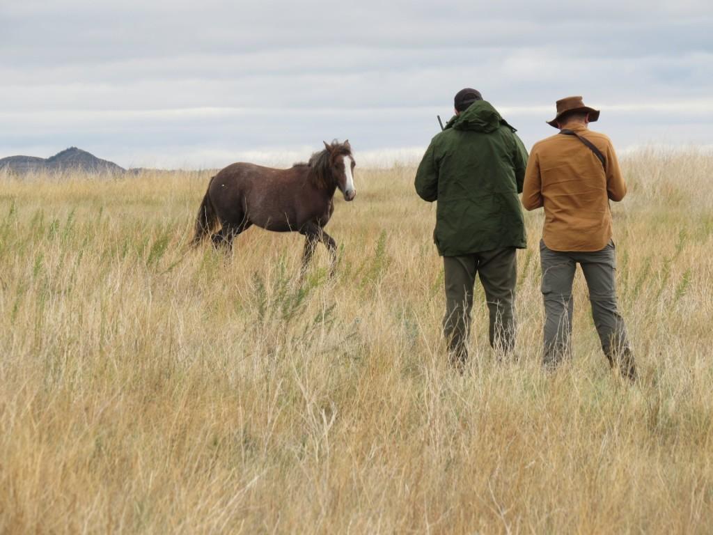 wild.horses.body4